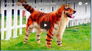 Wierdest Dog Breeds